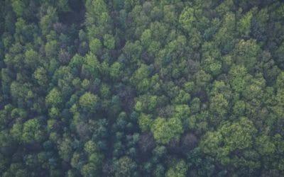 Costco and Redding Tree Ordinance